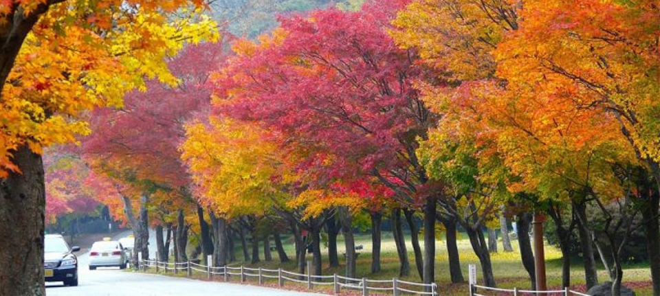 the Best Time to visit South Korea, When is the Best Time to visit South Korea?, Culturenesia